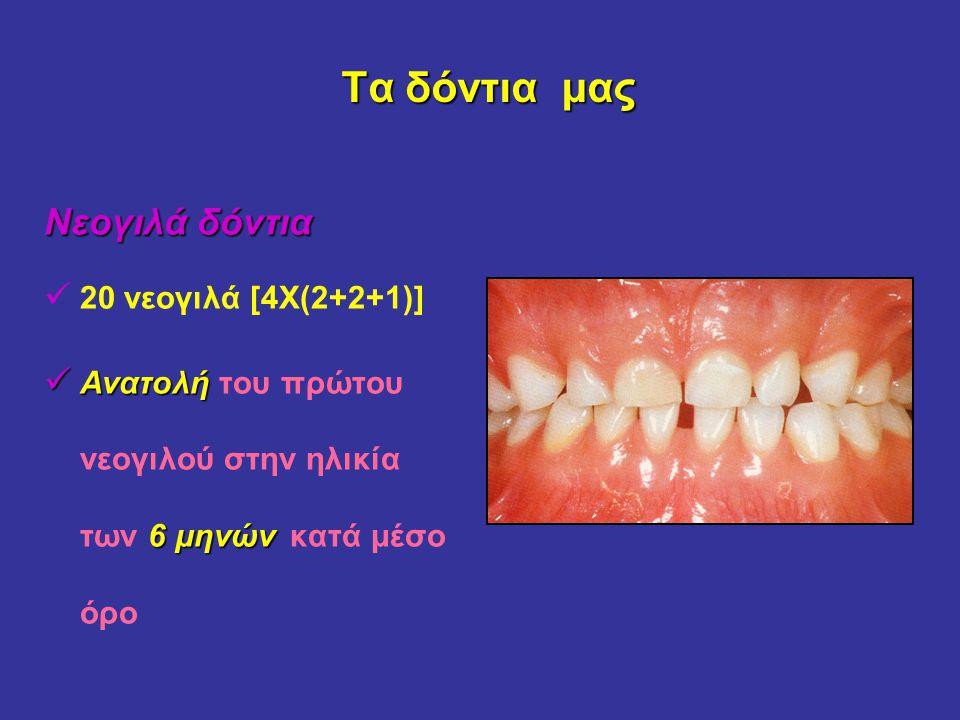 Τα δόντια μας Νεογιλά δόντια 20 νεογιλά [4Χ(2+2+1)]